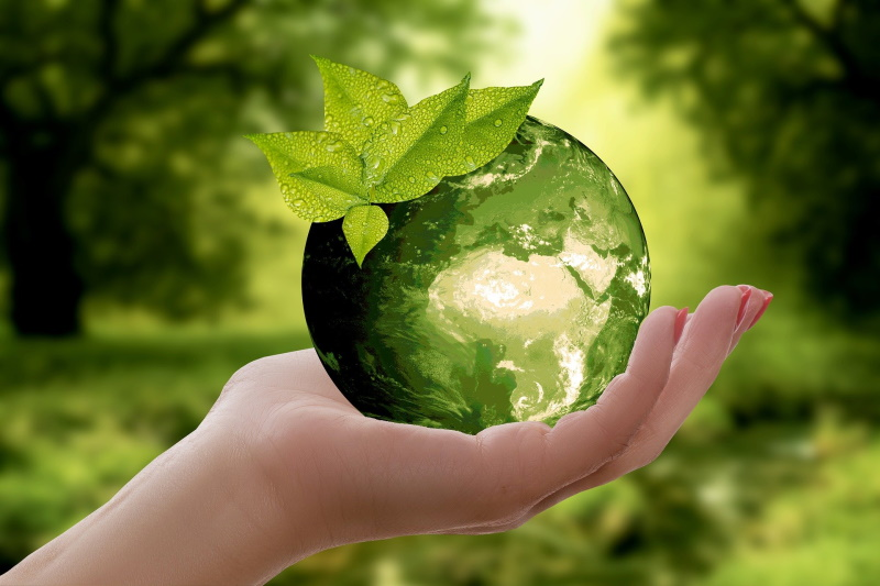 Sustainability for Corporates: Letting the Green Light Shine